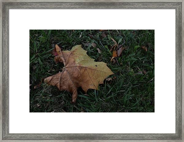 Lonely Leaf Framed Print