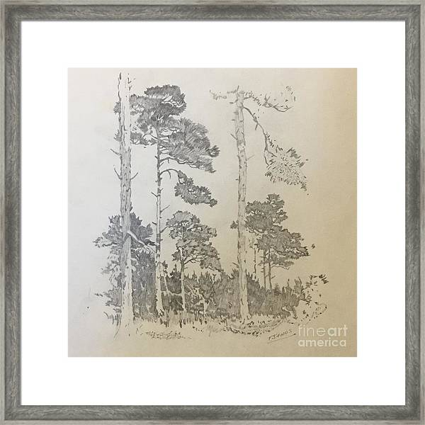 Lonely Pines Framed Print