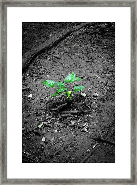 Lonely Plant Framed Print