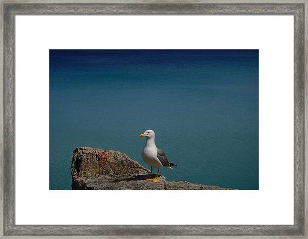 Lonely Seagull Framed Print