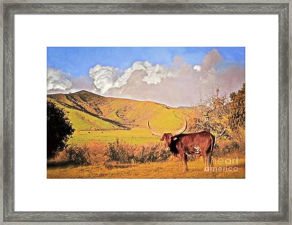 'lonesome Longhorn' Framed Print by Gus McCrea