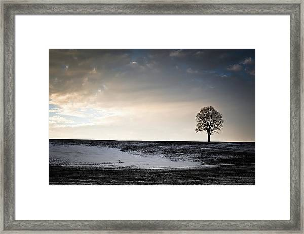 Lonesome Tree On A Hill IIi Framed Print