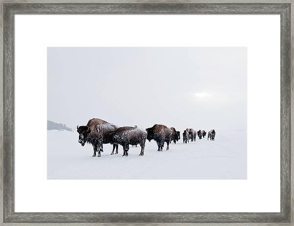 Long Brown Line Framed Print