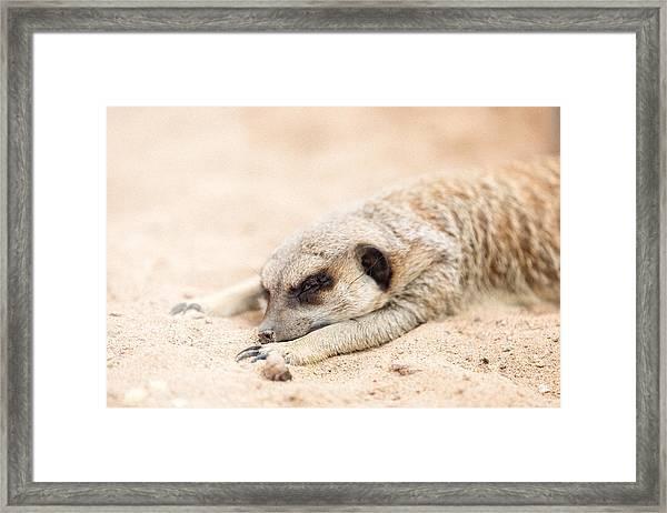 Long Day In Meerkat Village Framed Print