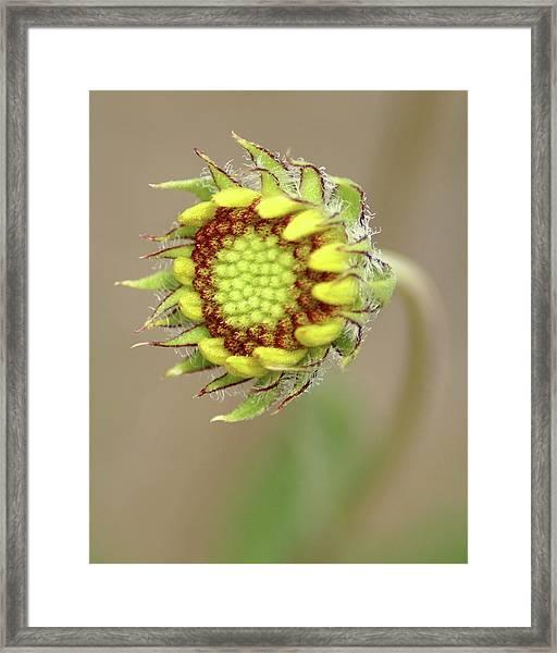 Long Stemmed Beauty Framed Print
