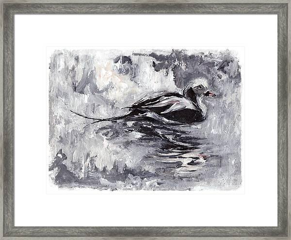 Long-tailed Duck Framed Print