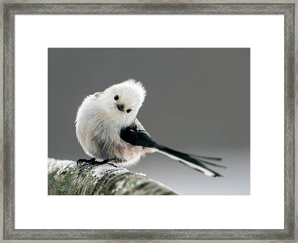 Charming Long-tailed Look Framed Print