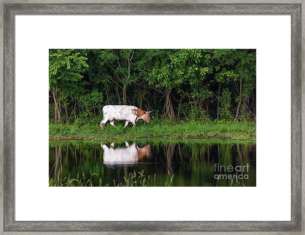 Longhorn #2 Framed Print