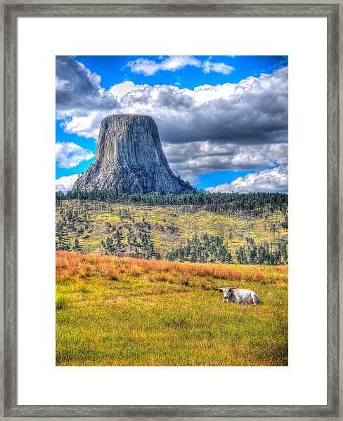 Longhorn At Devils Tower Framed Print