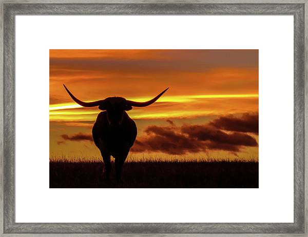 Longhorn At Sunset Framed Print