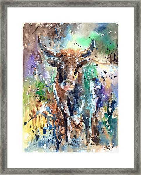 Longhorn Steer Framed Print