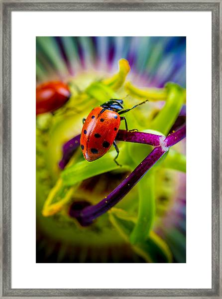 Look At The Colors Over There. Framed Print