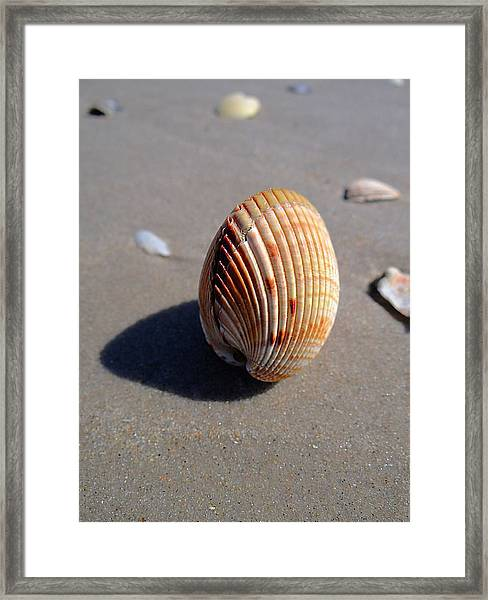 Look What The Tide Left Framed Print