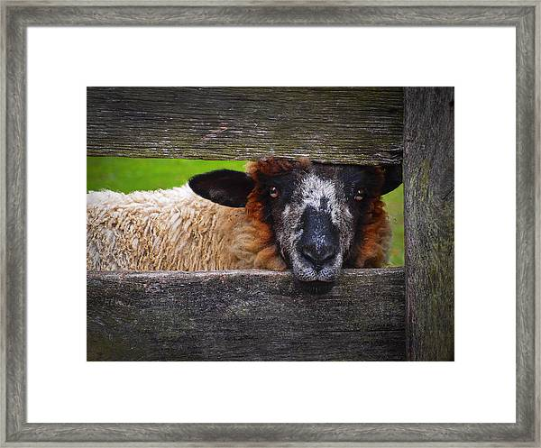 Framed Print featuring the photograph Lookin At Ewe by Skip Hunt