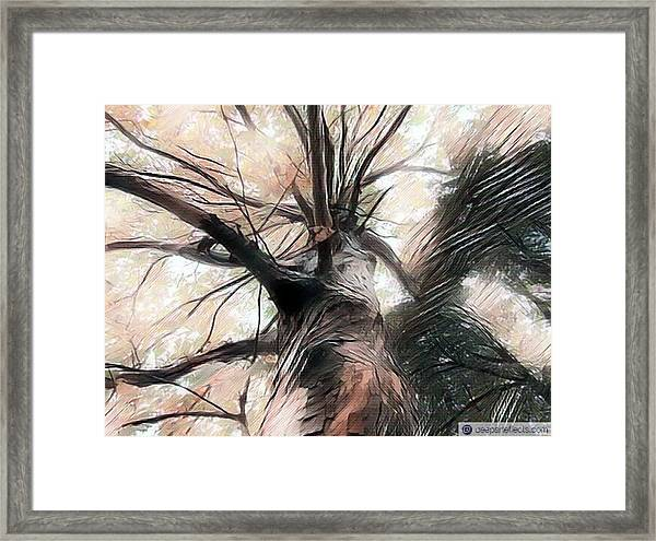 Lookin Up The Tree #digitalart Framed Print by Michal Dunaj