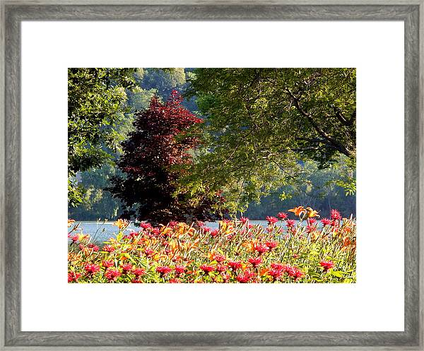 Looking For Peace Framed Print
