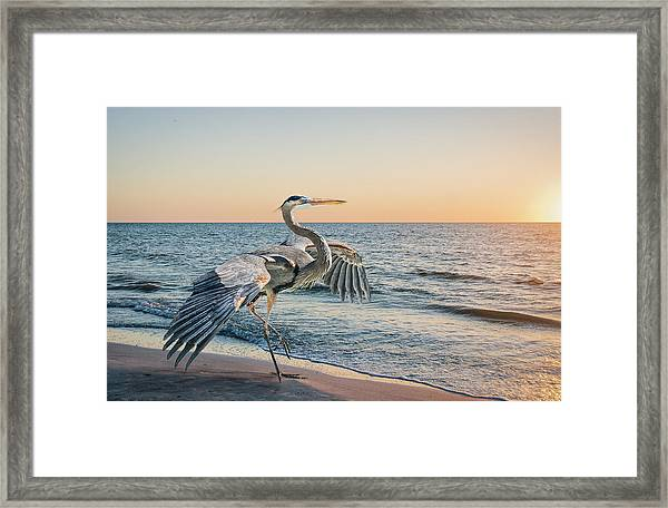 Looking For Supper Framed Print
