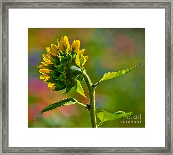 Looking For The Sun Framed Print
