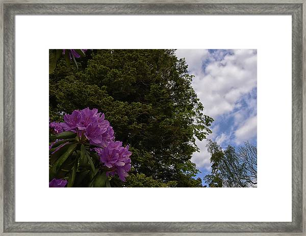 Looking To The Sky Framed Print