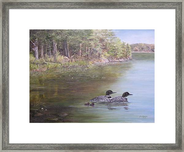 Loon Family 1 Framed Print