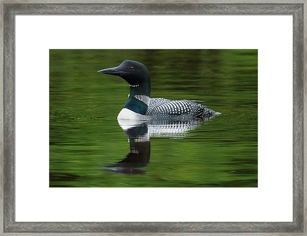 Loon Reflections On The Lake Framed Print