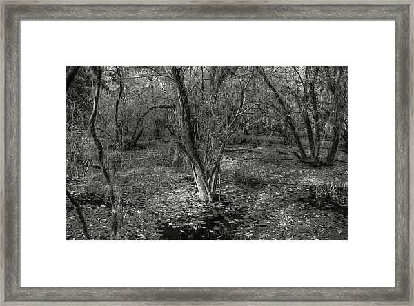 Loop Road Swamp #3 Framed Print