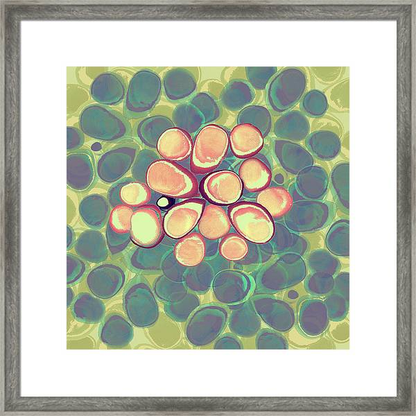 Loopy Dots #5 Framed Print