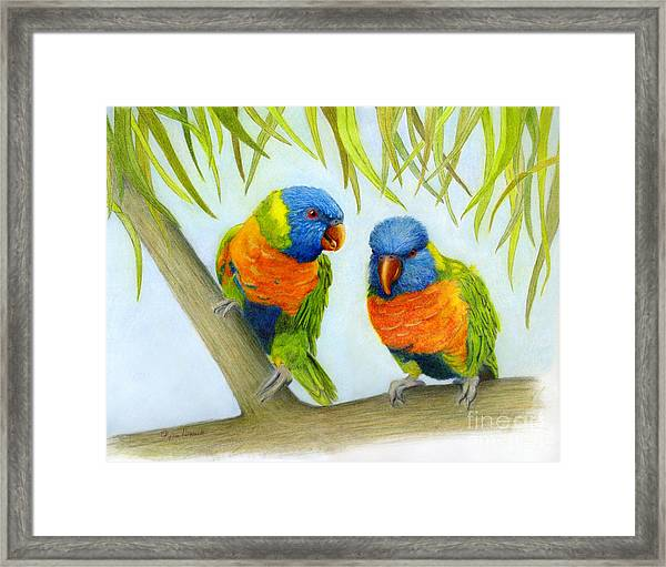 Lorikeet Pair Framed Print