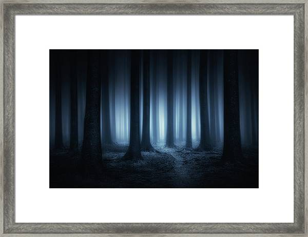 Lost In The Forest Framed Print