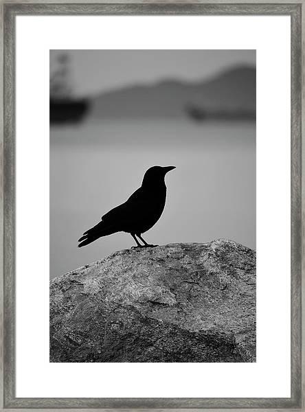 Lost Wings Framed Print
