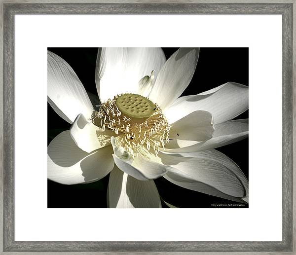 Framed Print featuring the photograph Lotus 8514ds by Brian Gryphon
