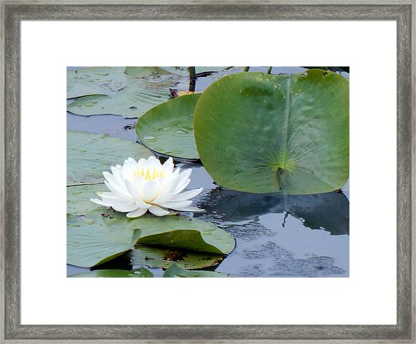 Lily And Leaf Framed Print