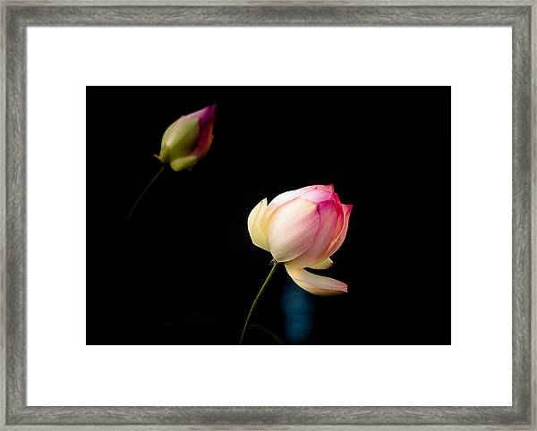 Lotus On Black Framed Print