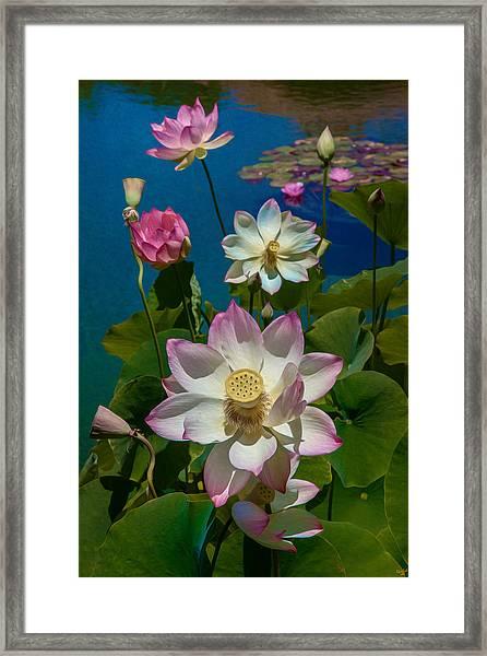 Lotus Pool Framed Print