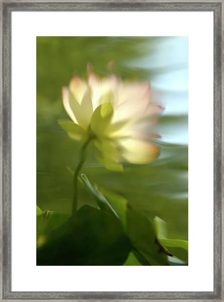 Lotus Reflection Framed Print