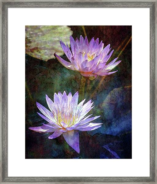 Lotus Reflections 2980 Idp_2 Framed Print