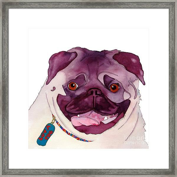Love A Pug Framed Print