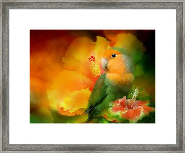 Love Among The Hibiscus Framed Print