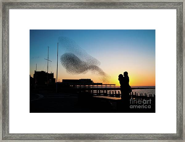 Love Birds At Sunset Framed Print