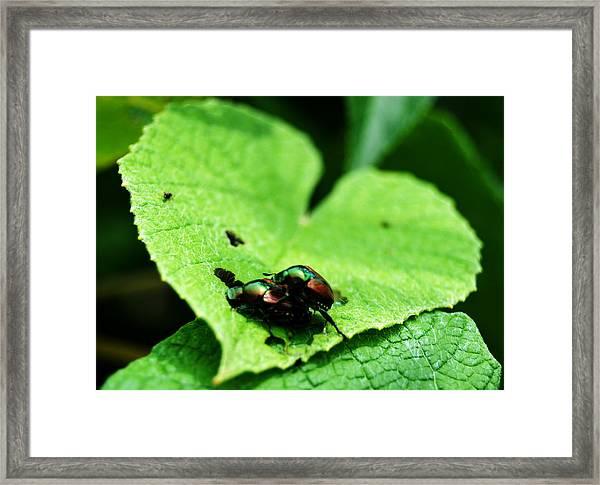 Love Bugs Framed Print