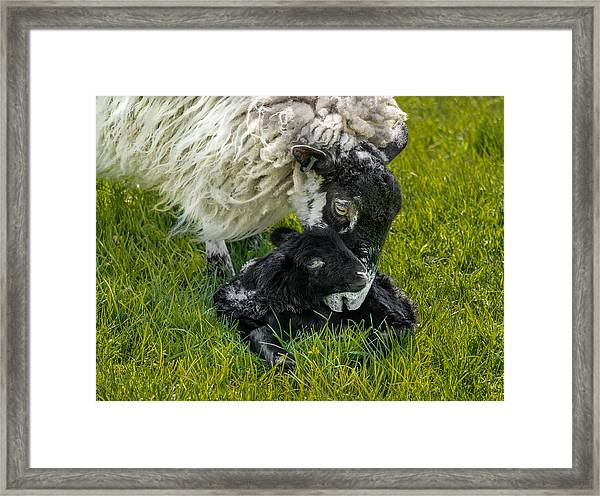 Framed Print featuring the photograph Just Born by Nick Bywater