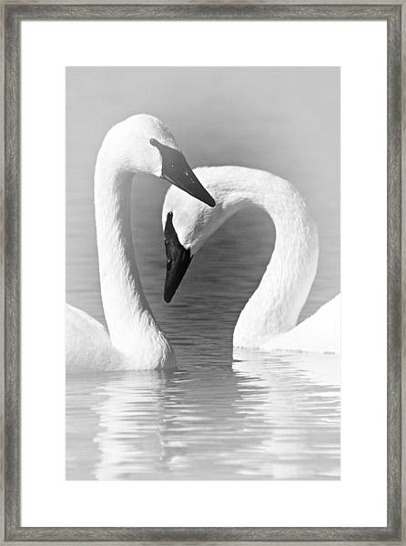 Love In Black And White Framed Print