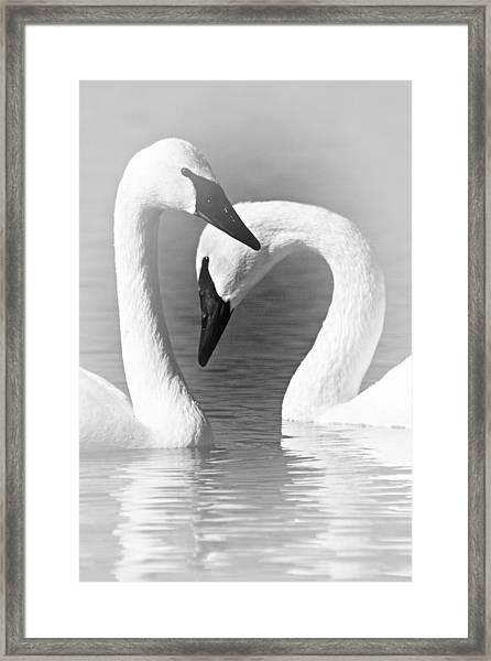 Love In Black And White Framed Print