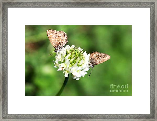 Love Moths Framed Print
