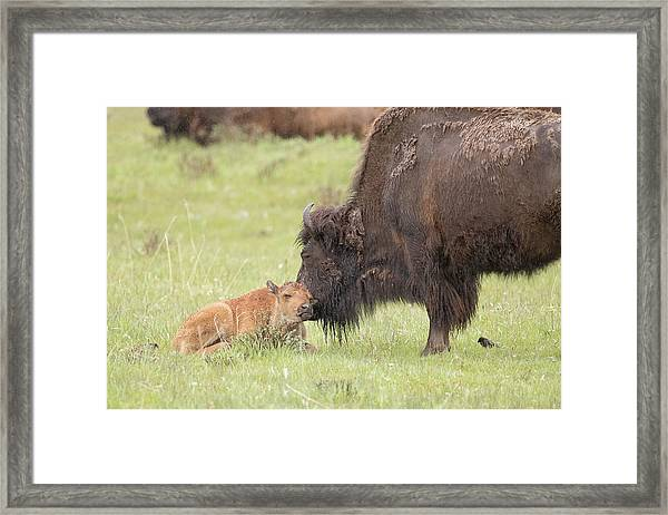 Love My Mama Framed Print