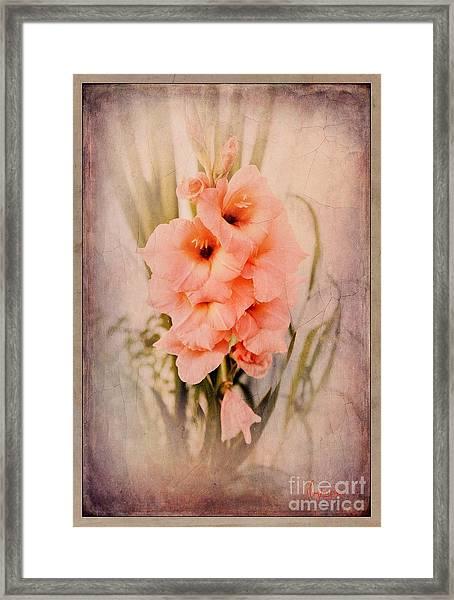 Lovely Gladiolus Framed Print