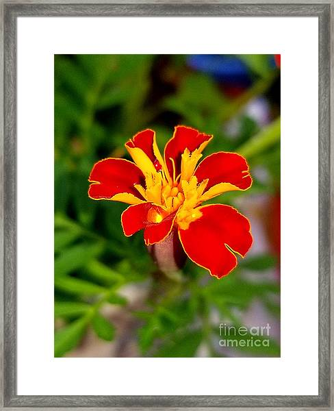 Lovely Little Flower Framed Print