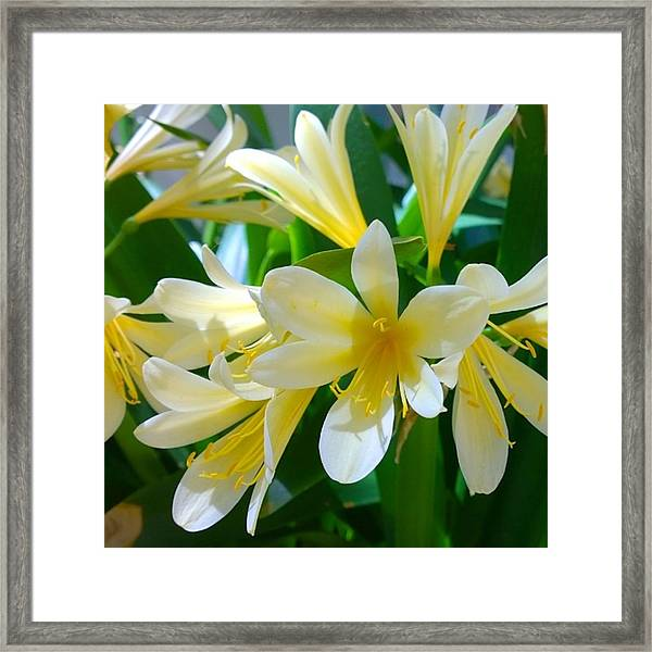 Lovely White And Yellow #flowers Framed Print