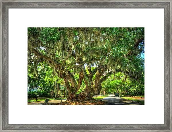 Lovers Oak Live Oak Tree Brunswick Georgia Art Framed Print