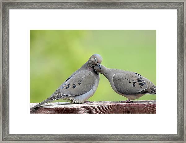 Lovey Doveys Framed Print